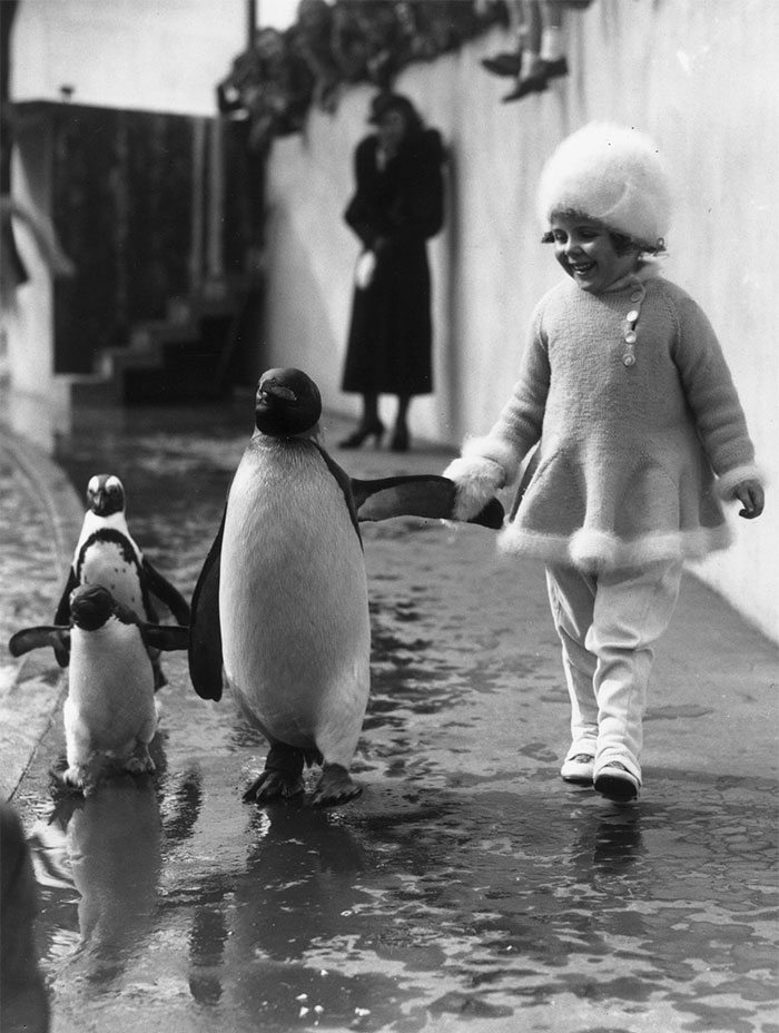 A Little Girl Holds A Penguin's Flipper As They Walk Together Around The London Zoo, 1937