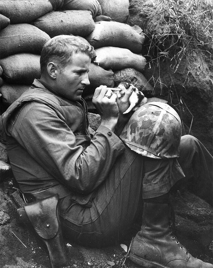 Marine Sergeant Frank Praytor Feeding An Orphaned Kitten. He Adopted The Kitten After The Mother Cat Died During The War.