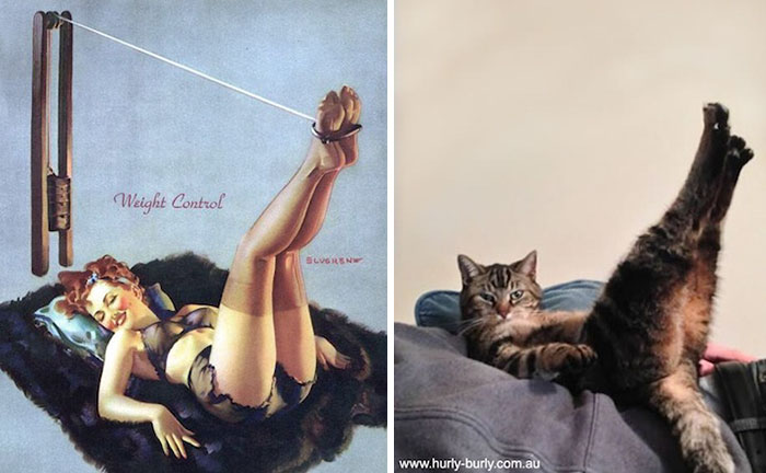 Hilarious Photos Of Cats Posing Like PinUp Girls ViraScoop - 24 hilarious photos cats posing like pin girls