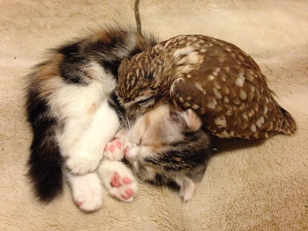 Owlet And Kitten Meet In A Coffee Shop And Become Best Friends - Owlet kitten meet coffee shop become best friends
