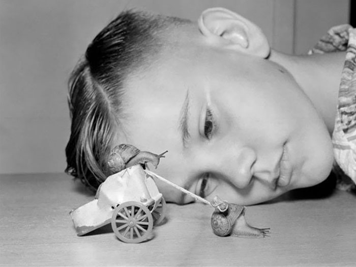Ten-Year-Old Martin Witter Watches Two Snails Race In His Home In Lynwood, California, 1954