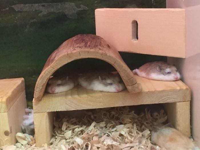 Hamsters Melting