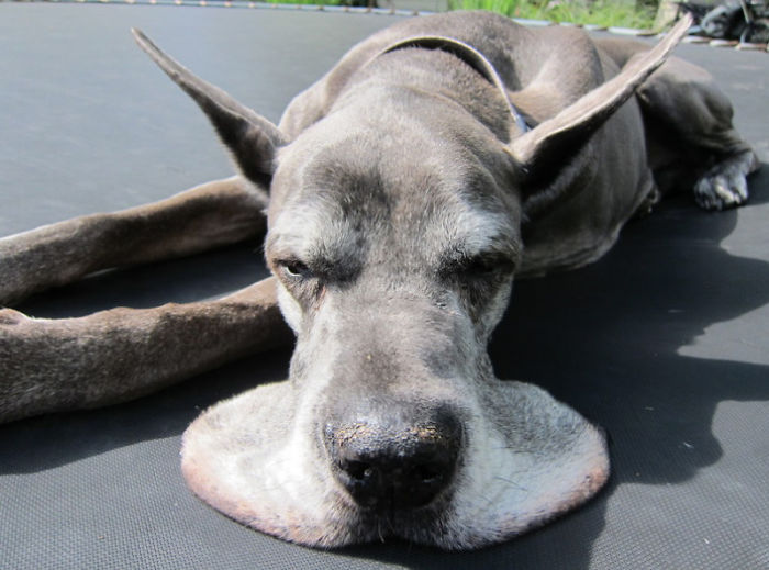 This Dog Is Melting