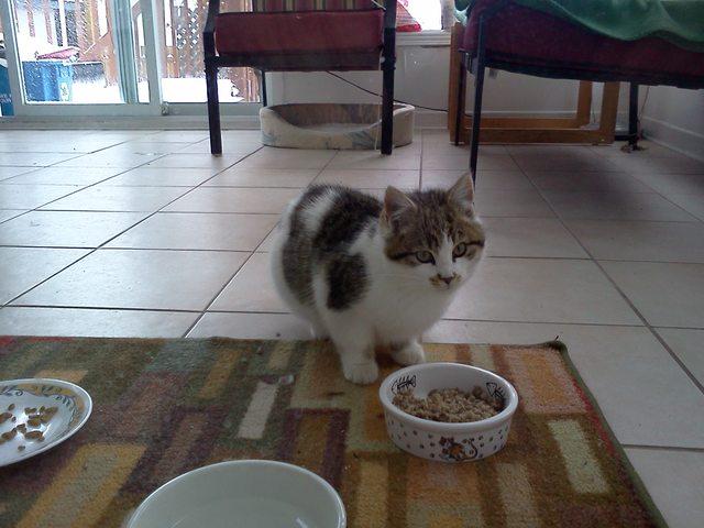 feral cat trap rental