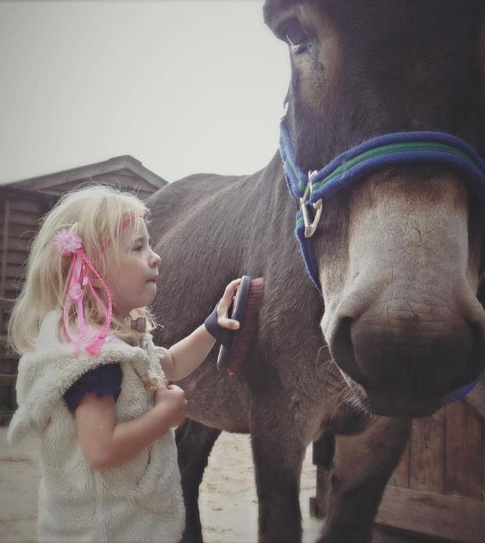 therapy-donkey-helps-girl-speak-amber-13