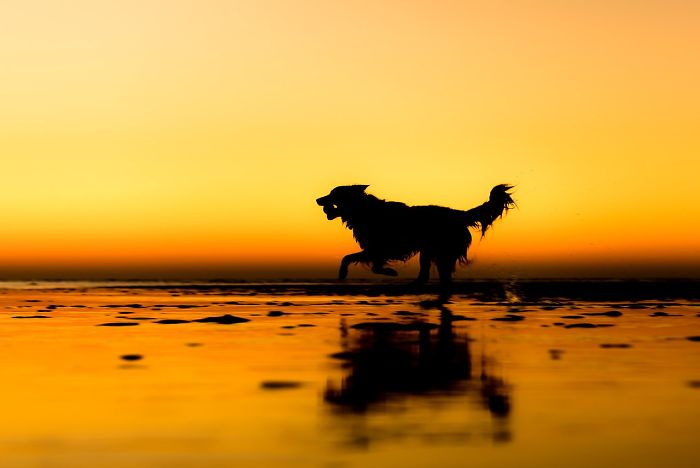 Rescue Dogs Charity Category 2nd Place Winner Martin Tosh, UK