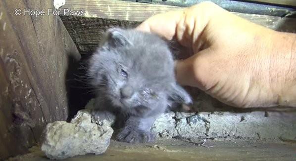 rescue-kitten-3