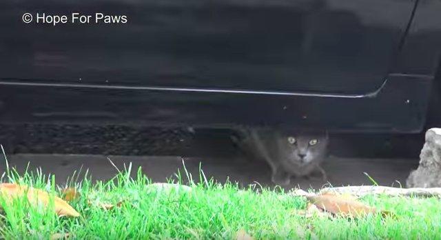 rescue-kitten-9