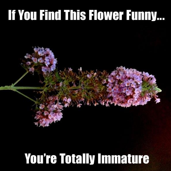 immature-pictures