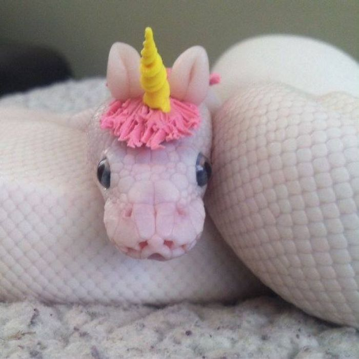 Snake With A Unicorn Hat