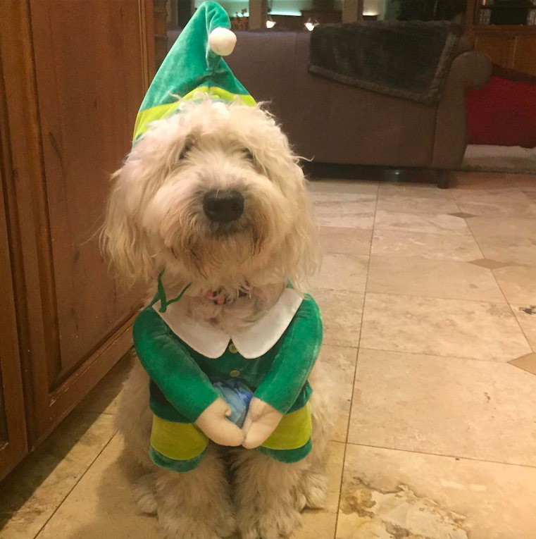 screen shot 2017 12 07 at 11 53 33 am These dogs in elf costumes are the cutest pictures youll see today