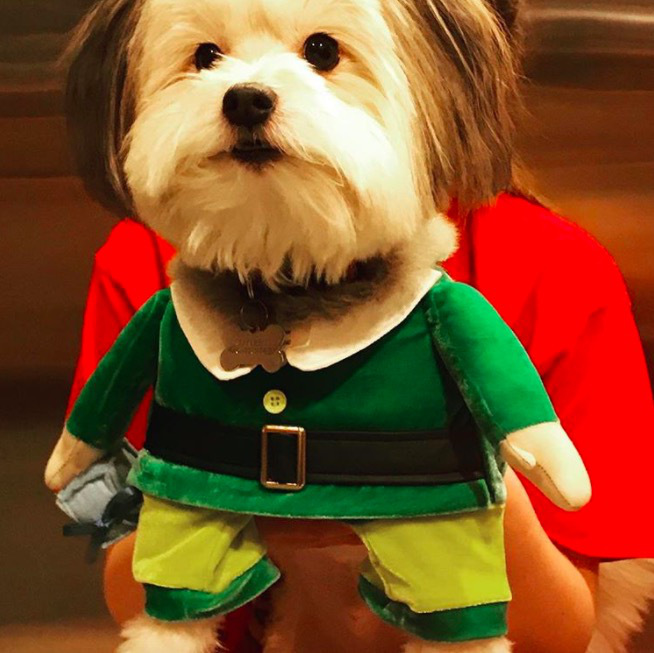screen shot 2017 12 07 at 11 44 04 am These dogs in elf costumes are the cutest pictures youll see today