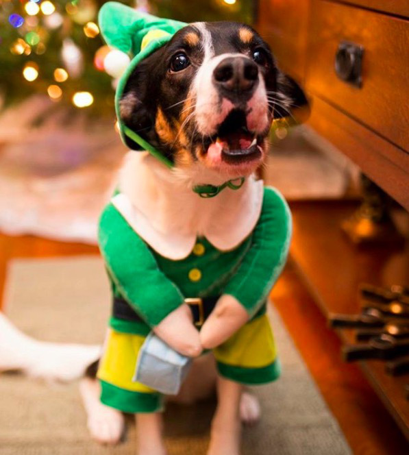 screen shot 2017 12 07 at 11 44 39 am These dogs in elf costumes are the cutest pictures youll see today