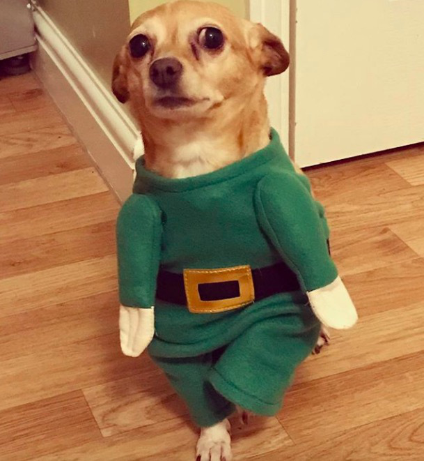 screen shot 2017 12 07 at 11 46 24 am These dogs in elf costumes are the cutest pictures youll see today