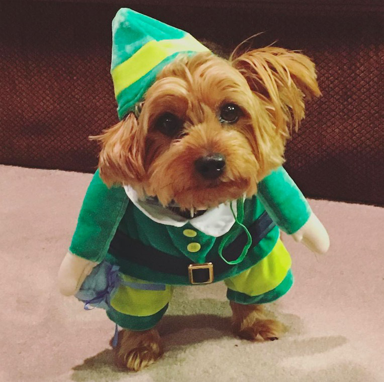 screen shot 2017 12 07 at 11 47 29 am These dogs in elf costumes are the cutest pictures youll see today