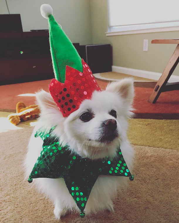 screen shot 2017 12 07 at 11 49 34 am These dogs in elf costumes are the cutest pictures youll see today