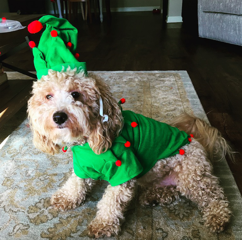 screen shot 2017 12 07 at 11 51 25 am These dogs in elf costumes are the cutest pictures youll see today