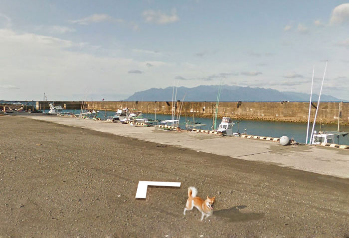 tiny-dog-follows-street-view-car-kagoshima-japan011
