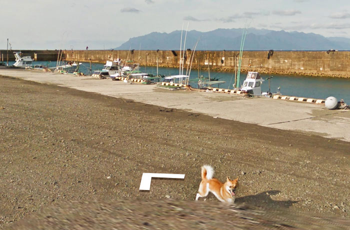 tiny-dog-follows-street-view-car-kagoshima-japan012
