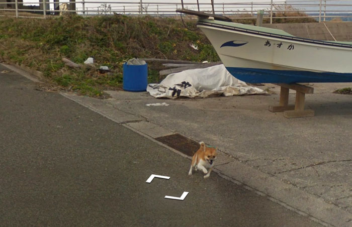 tiny-dog-follows-street-view-car-kagoshima-japan004