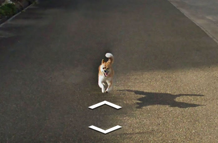 tiny-dog-follows-street-view-car-kagoshima-japan007