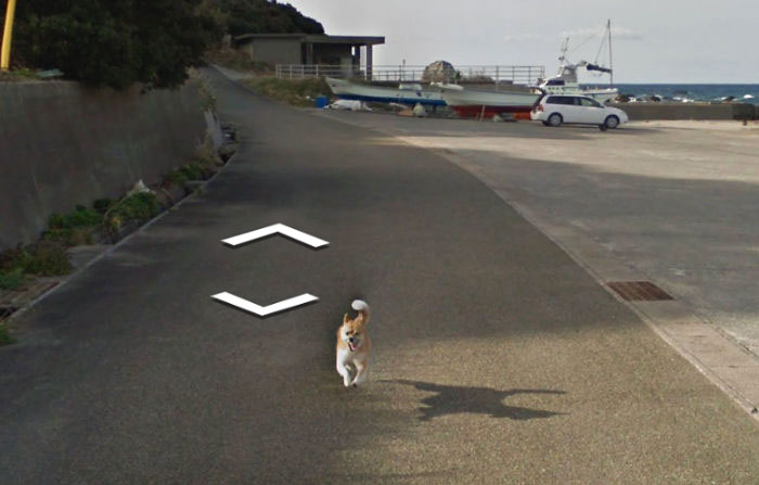 tiny-dog-follows-street-view-car-kagoshima-japan008