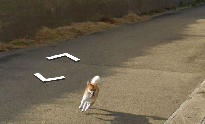 tiny-dog-follows-street-view-car-kagoshima-japan009